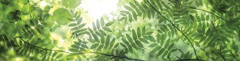 Chioma di alberi