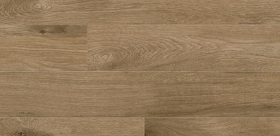 Perfect Oak Bogwood Image
