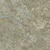 Pyrite Lichen muestra