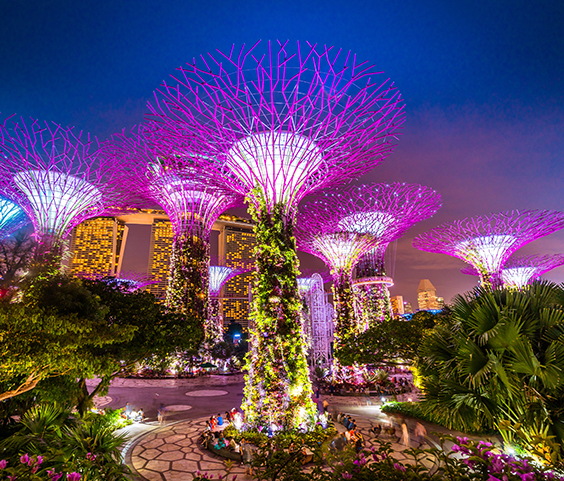 The Supertrees in the Singapore Gardens